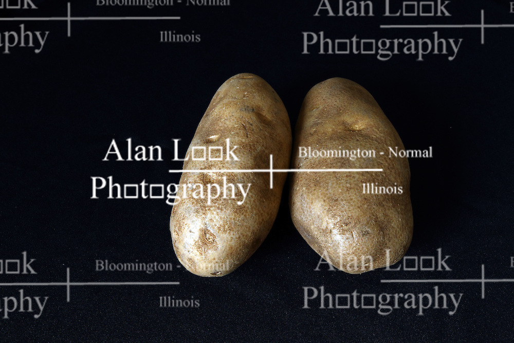 18 February 2016:   Studio - Potato on black #016.  A pair of baking potatoes shot in a studio on a black background.