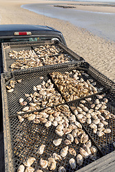 Oyster Trays On Truck