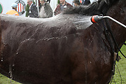 Pferdesport: 148. Deutsches Galopp Derby, Hamburg, 02.07.2014<br /> Feature, Pferd, Wasser, Abkuehlung<br /> © Torsten Helmke