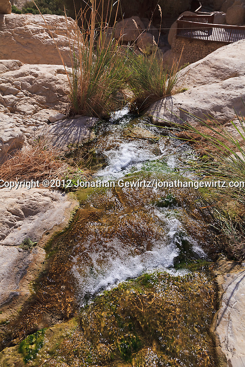 Nahal David in the Ein Gedi nature preserve. WATERMARKS WILL NOT APPEAR ON PRINTS OR LICENSED IMAGES.
