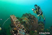 diver explores the wreck of an American WWII era LCU ( Landing Craft Utility ) or LCT ( Landing Craft - Tank ) sunk in 8-21m of water in Triboa Bay, within Subic Bay, Philippines, MR 379