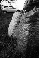 02/12/2010 Acquaviva delle Fonti, sacchi pieni di olive...La raccolta delle olive e la produzione dell'olio extravergine sono un rituale che si protrae da moltissimo tempo in Puglia, questo avviene solitamente nel periodo che va da novembre a dicembre, mentre il lavoro di preparazione e coltivazione si svolge lungo tutto l'arco dell'anno..La raccolta è seguita nella maggior parte dei casi, quando le olive non vengono vendute all'ingrosso, dalla molitura presso gli oleifici per la produzione di quello che da queste parti viene chiamato anche oro verde..