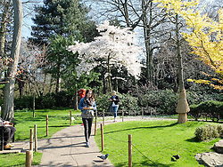 © Licensed to London News Pictures. 07/04/2015. London, UK. People enjoying the sunshine and warm spring weather in Holland Park in west London this morning. Photo credit : Vickie Flores/LNP