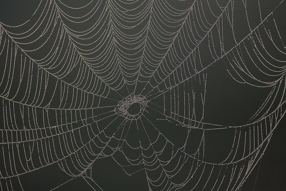 Patterns of dew-drops on spiders web, Bergslagen, Sweden.