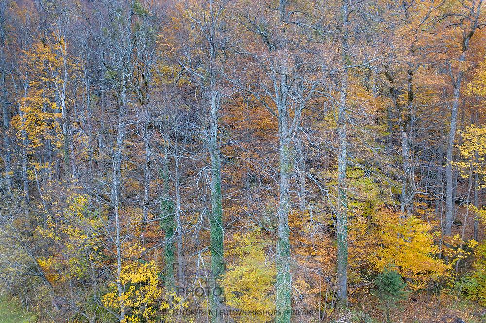 Ein bunter Buchen-Mischwald in Herbstfarben; Meiringen, Kanton Bern, Schweiz<br /> <br /> A colorful mixed beech forest in autumn colors; Meiringen, Canton of Bern, Switzerland