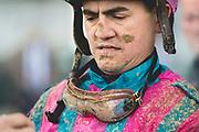 November 1-3, 2018: Breeders' Cup Horse Racing World Championships. Jockey Brian Hernandez