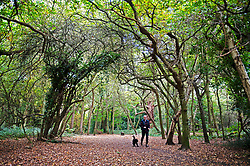 ©Licensed to London News Pictures 20/10/2020  <br /> Chislehurst, UK. A dog walker. A grey and windy Autumnal weather day today at Scadbury Park Nature reserve in Chislehurst, London. Strom Barbara is set to hit the UK with high winds and rain tonight. Photo credit:Grant Falvey/LNP