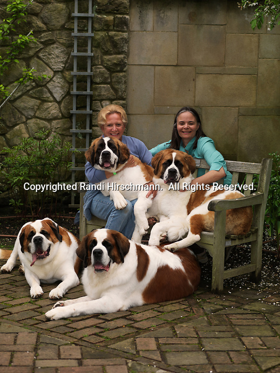 """St. Bernards, AKC, 5-year-olds April and May along with 9-month-olds """"Sugar"""" and """"Mocha"""" with owner Cynthia Knight and her daughter, Rebecca Knight,  photographed at Stan Hywet Hall & Gardens located in Akron, Ohio.  (PR)"""