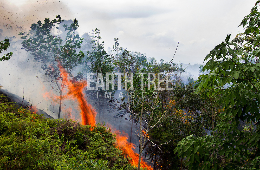Fires continued to burn in peat forest, Sumatra, Indonesia. According to a field team from the coalition of NGO's to protect Tripa, that visited the area. Fires are continuing to be lit in the highly threatened Peat Forest despite assurances from the Indonesian central government that 'triple track' legal action was underway and a small area of the Peat Forest had returned to the moratorium map central to the multibillion agreement between Indonesia and Norway to reduce carbon emission from burning the carbon dense Peat Forests.
