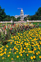 Flower gardens in Civic Center Park with the Colorado State Capitol Building in background, Denver, Colorado USA