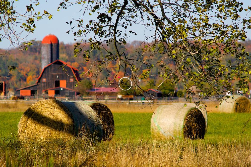 Kentucky Farm Autumn Fall Leaves