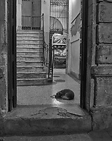 Guard Dog at the Entrance. Night Walkabout in Old Havana. Image taken with a Leica T camera and 23 mm f/2 lens.
