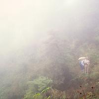 Trekkers in the fog below Annapurna Sanctuary, Nepal