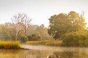 Landscape at sunrise,Tadoba National park,India