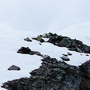 A lone mountain goat surprising camera operator Matt Hines.