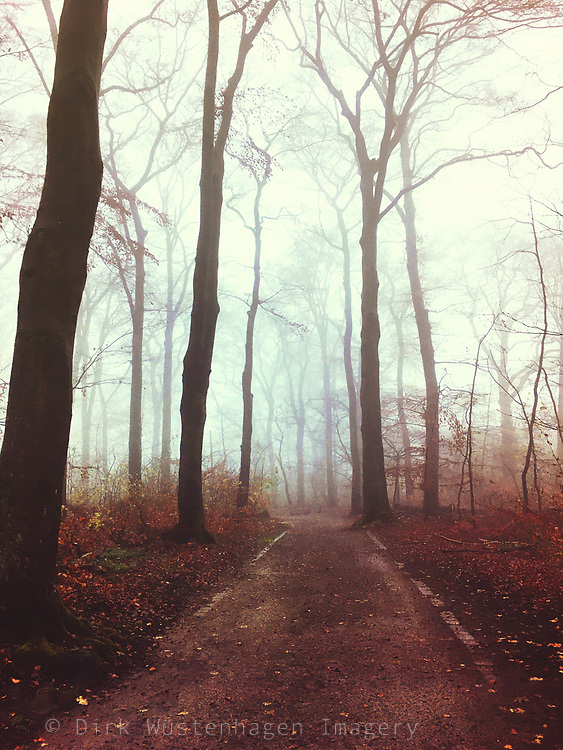 Forest path on a mist autumn day