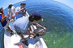 Jeff Seminoff Releasing Green Turtle