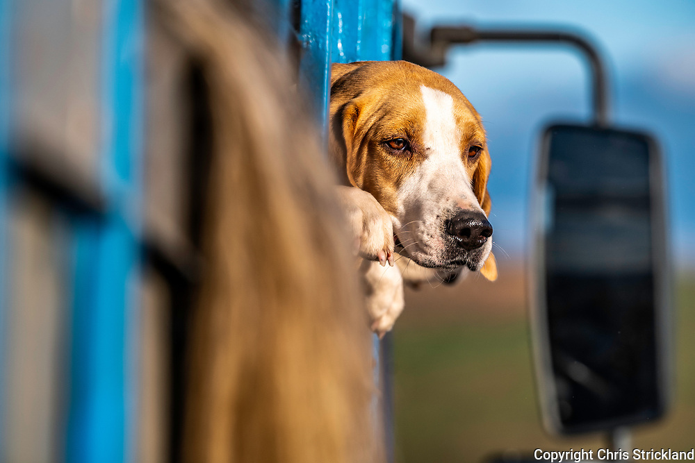 Otterburn, Northumberland, England, UK. 29th September 2018. A horses tail hangs outside a horsebox prior to the Border Foxhounds departing for a trail hunt across Northumberland National Park.