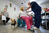 A chihuahua named Murray looks on as Brenda Misawic, left, is injected with her second dose of the Moderna vaccine by critical care registered nurse Timothy Brewer, right, as Lehigh Valley Health Network brought their mobile vaccination clinic to Majestic House on May 6, 2021, which offers low income housing to Seniors 55 years and over, in Tamaqua, Pennsylvania.