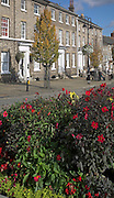 Flower beds and Georgian terraced housing  in the Angel Hill conservation area, Bury St Edmunds, Suffolk, England