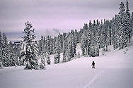 Cross-country skiers and snow-covered trees in winter in Castle Valley, near Donner Summit, North Lake Tahoe area, California