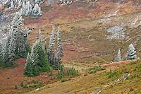 A lone hiker ascends the Golden Gate trail switchbacks, Mount Rainier NP, WA, USA
