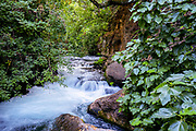 Banias Spring and Stream (Banias River or Hermon River) Golan Heights, Israel This spring is one of the sources of the River Jordan