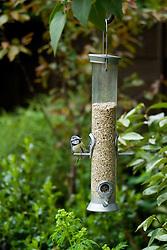 Bird feeder - with blue tit