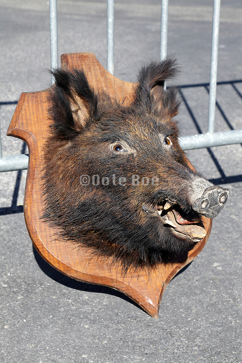 stuffed wild boar displayed at a flee market