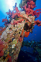 Soft Coral Encrusted Wreck Mast