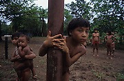 YANOMAMI INDIANS. South America, Brazil, Amazon. Children playing. Yanomami indians, a primitive tribe, living in the tropical rainforest, in communal traditional molaca dwellings. They are huntergatherers passing on their traditions and skills  from generation to generation. They are the guardians of their forest and its fragile ecosystem. Their lifestyle and their lands diminish every year in the face of encroaching deforestation, forest fires, campesinos who slash and burn primary rainforest, from cattle ranching, commercial plantations, gold and diamond mines.