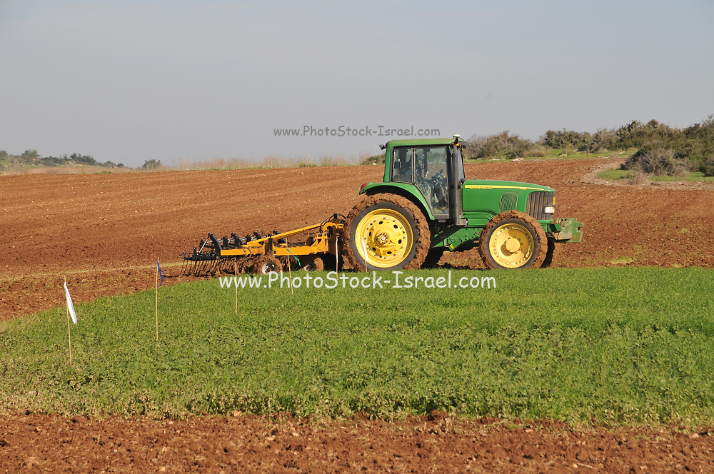 Farmer drives a cultivator to till the earth before planting or sowing. A cultivator is any of several types of farm implement used for secondary tillage. One sense of the name refers to frames with teeth (also called shanks) that pierce the soil as they are dragged through it linearly. Photographed in Israel in January