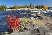 Red maple trees ar edge of the Magnetawan River<br /> Burk's Falls<br /> Ontario<br /> Canada