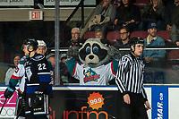 KELOWNA, CANADA - JANUARY 25:  Rocky Raccoon the mascot of the Kelowna Rockets mocks the Victoria Royals on January 25, 2019 at Prospera Place in Kelowna, British Columbia, Canada.  (Photo by Marissa Baecker/Shoot the Breeze)