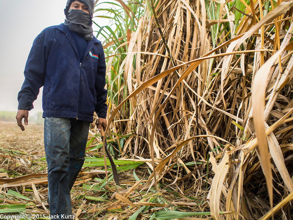 09 FEBRUARY 2015 - THA MAI, KANCHANABURI, THAILAND: A worker goes through a field looking for salvageable stalks of sugarcane after a mechanical harvester clear cut the field in Kanchanaburi, Thailand. Thailand is the world's second leading sugar exporter after Brazil. The 2015 sugarcane harvest in Thailand is expected to fall about 5% compared to the 2014 harvest because of a continuing drought in Southeast Asia. Brazilian production is also expected to fall this year because of ongoing drought in Brazil. Australia, the number 3 sugar exporter, is also expected to see a smaller harvest this year because of continuing draught in Australia.   PHOTO BY JACK KURTZ