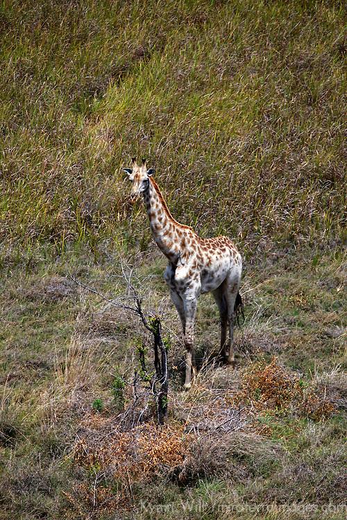 Africa, Botswana, Okavango Delta.