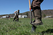 """Daniel """"Rudi"""" Ruddell, of the White River Partnership, left, and Lynn Wolfe, of the U.S. Forest Service, plant native trees and shrubs in a riparian buffer between the Middle Branch of the White River and Green Acres farm pasture land in South Randolph, Vt. Wednesday, April 27, 2016. The planting was done after the Wortmans moved their fence lines back from the river to prevent erosion and reduce runoff of nutrients and bacteria into the waterway from manure. (Valley News - James M. Patterson) Copyright Valley News. May not be reprinted or used online without permission. Send requests to permission@vnews.com."""