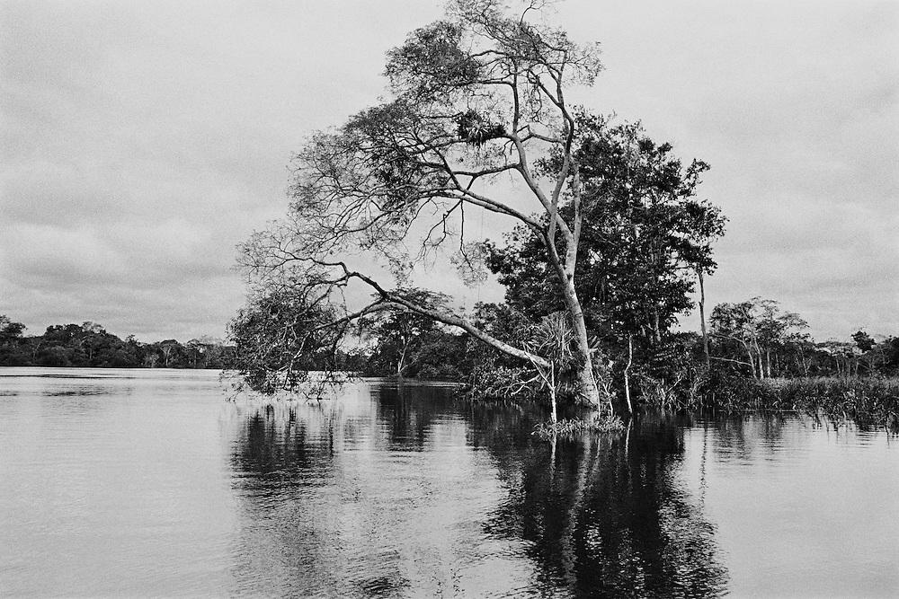 Perou, rio amazonas, amazonie peruvienne.