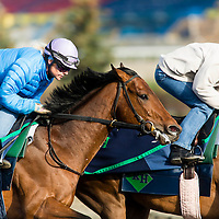 Thoroughbred Racing 2014 - Gallery 02