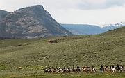 Trail riders head for the hills in Yellowstone National Park, Wyoming.