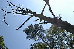 tree, boom, flora