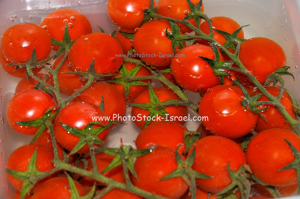 Cherry Tomatoes on a plate