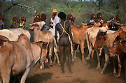Before his bull jump a Hamar initiate wanders naked among the herd, in South Omo, Ethiopia. The bull jump is a ritual at which a man runs across the backs of a row of bullocks in order to become eligible for marriage. Nudity represents his death and rebirth, as he is about to assume a new social role. The 40,000-strong, cattle-herding Hamar are among the largest of the 20 or so ethnic groups which inhabit the culturally diverse Omo region in south-west Ethiopia.