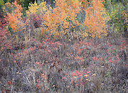 Autumn Colors in Field and Forest, Eastern WA.