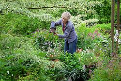 Carol Klein replacing pots of spent narcissus with Geranium clarkei 'Kashmir White'. Planting geraniums