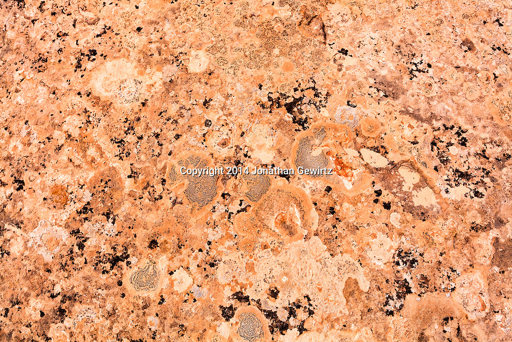 Closeup view of a piece of desert sandstone in Canyonlands National Park, Utah, showing rough texture and plant growths. WATERMARKS WILL NOT APPEAR ON PRINTS OR LICENSED IMAGES.