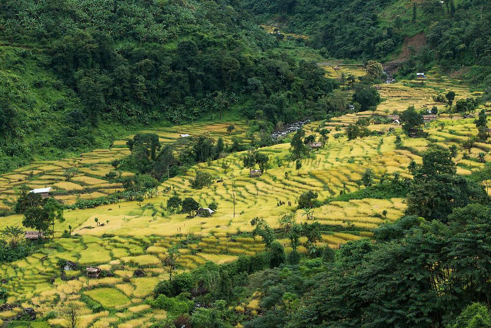 Konyak Naga rice terraces<br /> Konyak Naga headhunting Tribe<br /> Mon district<br /> Nagaland,  ne India