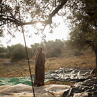 Mustafa Jarar in the morning in his olive grove near his village in Burqin, in the West Bank. Olives and their oil are sacred to Palestinians, where over 8 million olive trees grow. Over 80,000 Palestinian farmers like Mustafa make a substantial portion of their annual income from olives and the olive industry.
