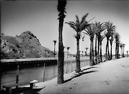 Date palms, native to North Africa and the Middle East, line the main channel of the greatly diminished Colorado River as it is directed into the Laguna Dam,  Fort Yuma Quechan Indian Reservation, California, USA.