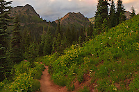Naches Peak Loop Trail and Yakima Peak along the Pacific Crest at Chinook Pass in Mount Rainier National Park, Washington state, USA